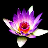 Flower Blooming Reiki New Beginnings